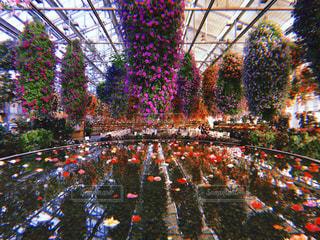 flower gardenの写真・画像素材[1236777]