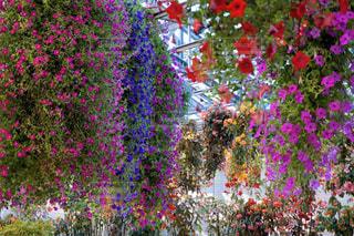 花のカーテンの写真・画像素材[1885869]
