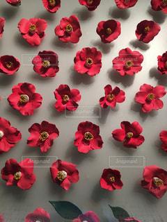 ピンクの花のグループの写真・画像素材[1388454]