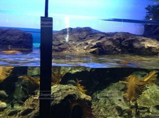 魚の写真・画像素材[1224240]