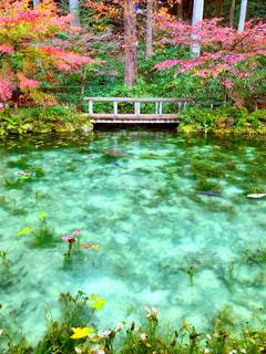 秋色に染まるモネの池の写真・画像素材[1612103]