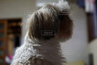 近くに犬のアップの写真・画像素材[1225403]