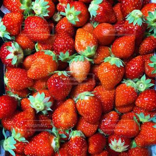 赤,いちご,フルーツ,果物,果実,イチゴ