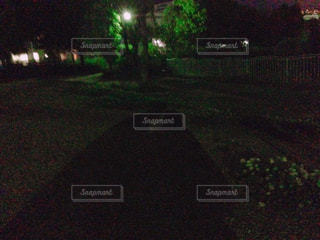 近く暗闇の中の木と緑のフィールドのの写真・画像素材[1226309]