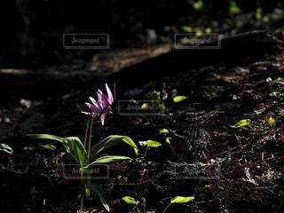 自然,花,夕日,草木,フォトジェニック,インスタ映え