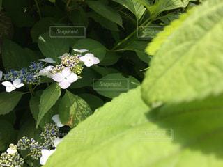 近くの緑の植物をの写真・画像素材[1234250]