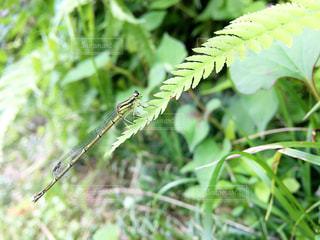 近くの緑の植物をの写真・画像素材[1252611]