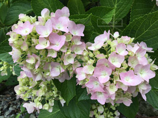 近くの花のアップの写真・画像素材[1240356]