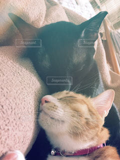 猫,お部屋,部屋,室内,仲良し,癒し,幸せ,お昼寝,ぐっすり,添い寝,ネコ