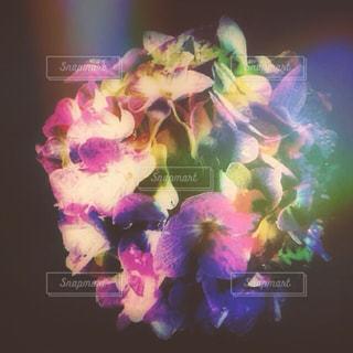 雨,紫陽花,梅雨