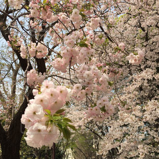 春,桜,花見,4月