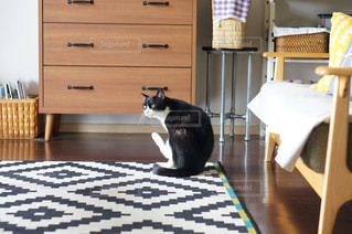 猫の写真・画像素材[2478520]