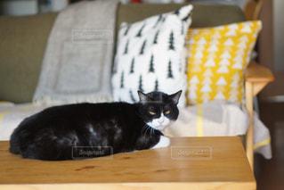 猫の写真・画像素材[2484167]