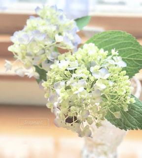 花,雨,紫陽花,梅雨,6月,blue,Green,アジサイ,フォトジェニック,優しい色