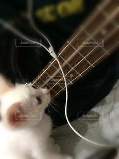 猫,お部屋,屋内,白,音楽,のんびり,まったり,ベース,カーペット