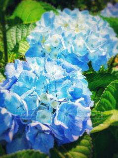 青,水色,鮮やか,鎌倉,草木,フィルム風,インスタ映え