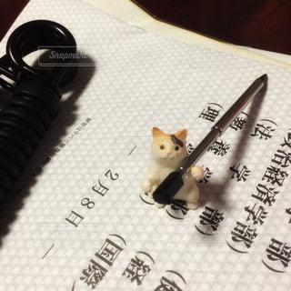 猫,動物,屋内,テスト,机,勉強,大学,受験,試験,ネコ,受験生
