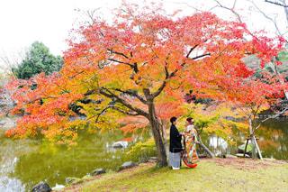 紅葉の季節の写真・画像素材[1230611]