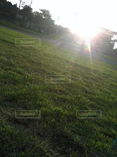 緑豊かな緑のフィールドに差し込む夕陽の写真・画像素材[1240731]
