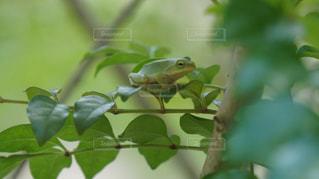 カエルさんも雨宿りの写真・画像素材[1244003]