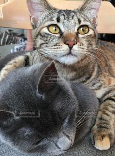 近くに猫のアップの写真・画像素材[1255883]
