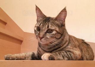 猫の写真・画像素材[1256246]