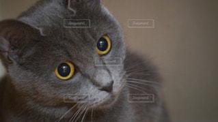 近くにカメラを見て猫のアップの写真・画像素材[1256405]