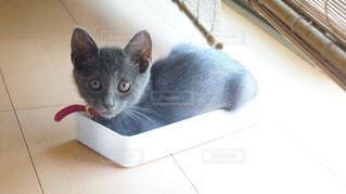 箱入り猫娘!ここが私のお気に入りのスペース♪の写真・画像素材[1258217]