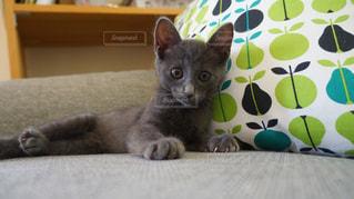 ソファの上に横になっている猫の写真・画像素材[1258218]