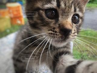近くにカメラを見て猫のアップの写真・画像素材[1258243]