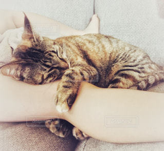 ベッドの上で横になっている猫の写真・画像素材[1258258]