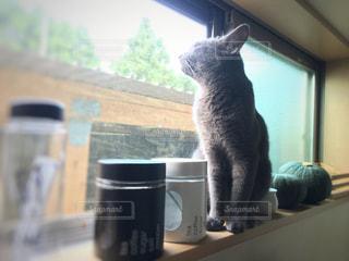 黄昏れる猫の写真・画像素材[1258261]