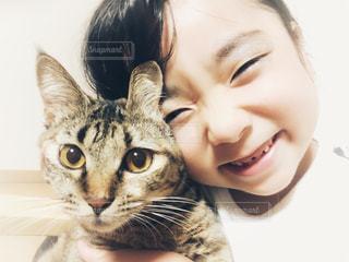 カメラを見ている猫の写真・画像素材[1258307]