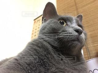 近くに猫のアップの写真・画像素材[1259958]