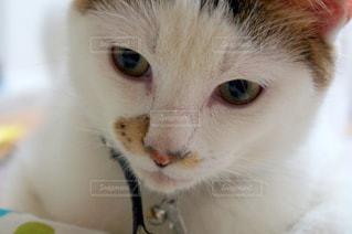 近くに猫のアップの写真・画像素材[1259961]