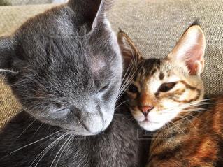近くに猫のアップの写真・画像素材[1268961]