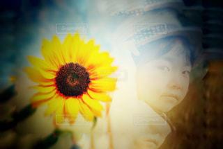 近くの花のアップの写真・画像素材[1275147]