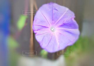 近くの花のアップの写真・画像素材[1351603]