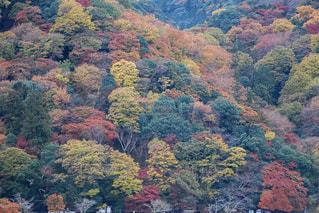 自然,秋,紅葉,京都,野外,フォトジェニック,インスタ映え,CANON EOSkiss,フォトコン