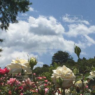 花,屋外,赤,草,flowers,草木
