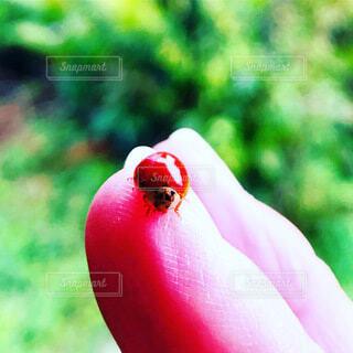 赤,樹木,てんとう虫