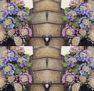 花,紫,ハート,額紫陽花,長崎,草木,眼鏡橋,爪先,シーボルト,小滝さん