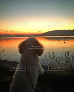 犬,夕日,湖,可愛い,滋賀県,キレイ,眺める