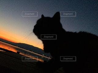 猫,夕日,湖,シルエット,滋賀県,キレイ