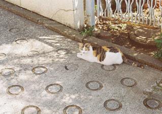 建物の上に横になっている猫の写真・画像素材[1235412]