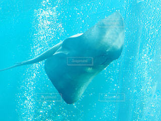アクアマリン水族館の写真・画像素材[1314588]