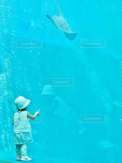 アクアマリン水族館の写真・画像素材[1314604]