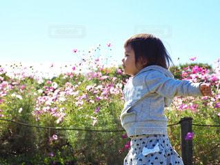 花,ピンク,緑,白,コスモス,カラフル,晴れ,青空,女の子,未来,天,幼児,秋桜,夢,草木,フォトジェニック,前向き,インスタ映え