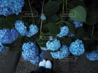 靴,青,アジサイ