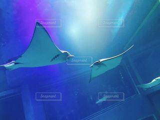 水面下を泳ぐ魚たちの写真・画像素材[1707168]